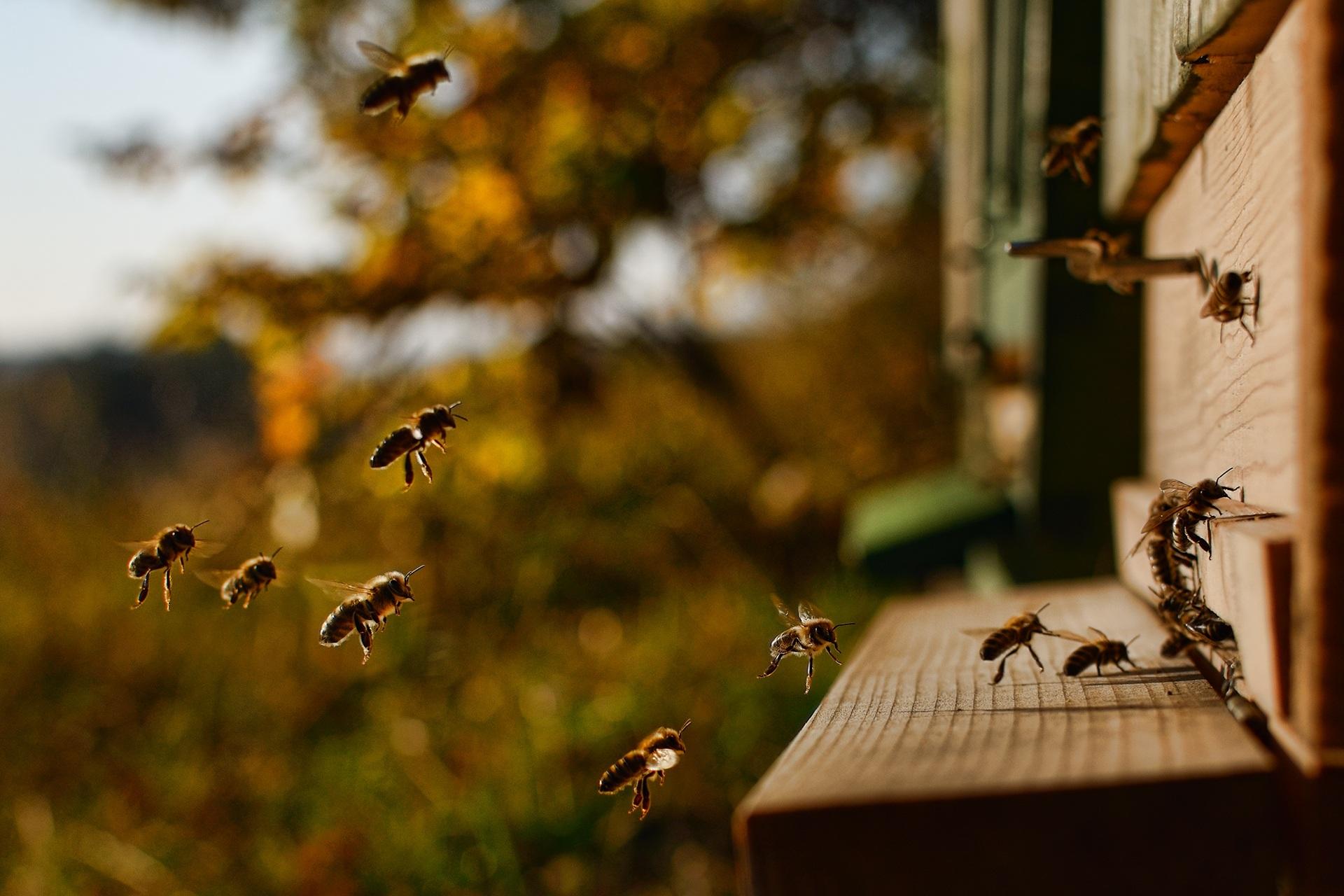 Pszczoły Pasieka